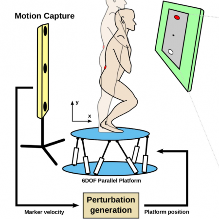 Human motor adaptation in whole body motion