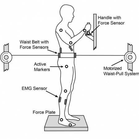 Holding a Handle for Balance during Continuous Postural Perturbations—Immediate and Transitionary Effects on Whole Body Posture