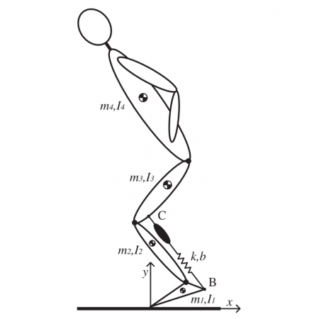 Optimization of biarticular gastrocnemious muscle in humanoid jumping robot simulation