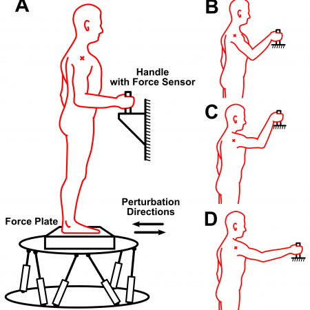 Effects of supportive hand contact on reactive postural control during support perturbations