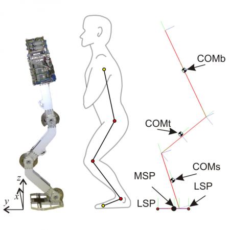 Constraining movement imitation with reflexive behavior: Robot squatting