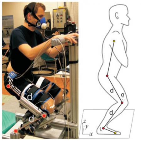 Effects of Robotic Knee Exoskeleton on Human Energy Expenditure