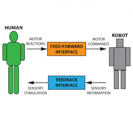 Learning of compliant human–robot interaction using full-body haptic interface