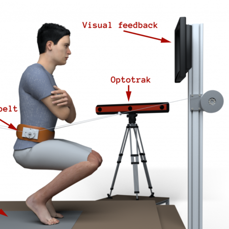 Understanding Human Adaptation in Squat-to-Stand movements