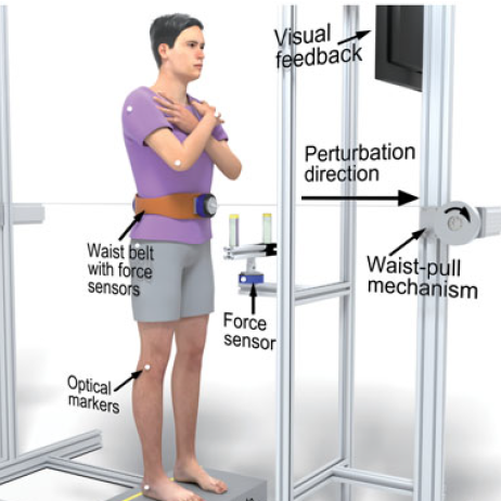 Staying on your feet: the effectiveness of posture and handles in counteracting balance perturbation