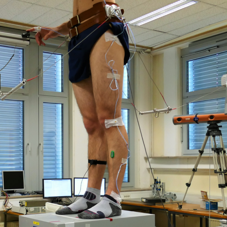 Postural control during induced stabilization of the center of mass and light touch